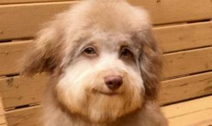 小狗长着一张人脸 这只混血小狗还找到一个伙伴