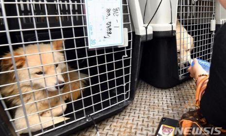 韩国首尔全面禁止屠狗 如有发现将采取一切手段阻止