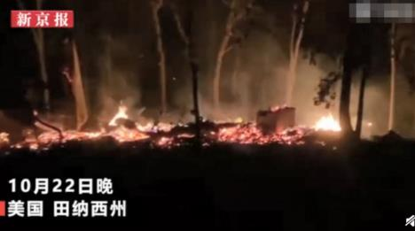 世界最大树屋被烧 原来长什么样子?多大?住一晚多少钱
