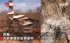 高达97英尺!世界最大树屋被烧 设计师抑郁了