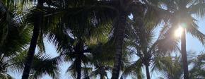 海南5条旅游精品线路开售 加快推进度假天堂和会展高地建设
