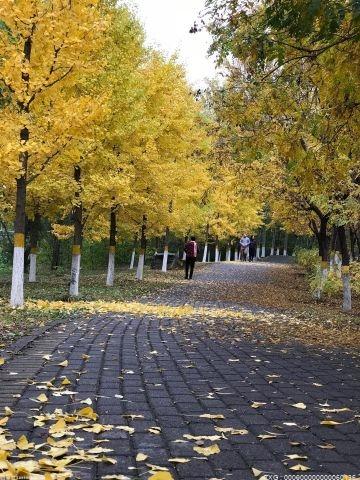 北京推出彩叶观赏点 实行预约购票限流比例仍为75%
